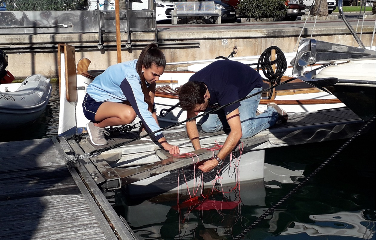 Marina Port de Mallorca turns into an area of biological experiments